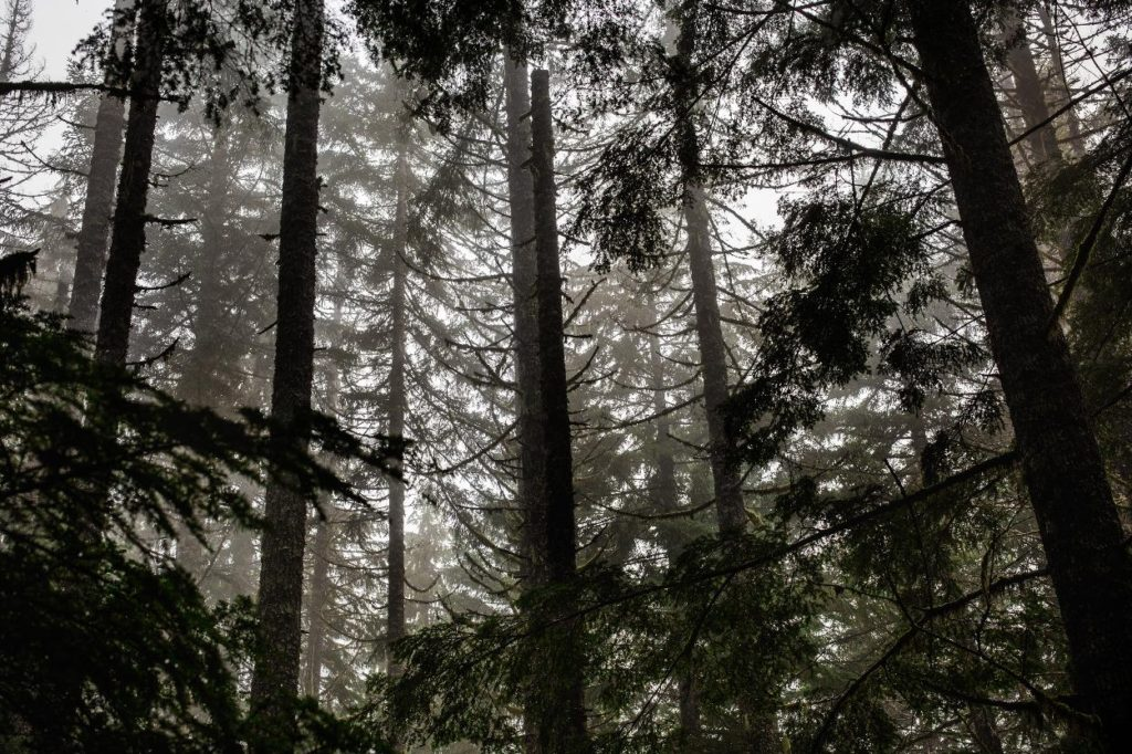Portland Forest